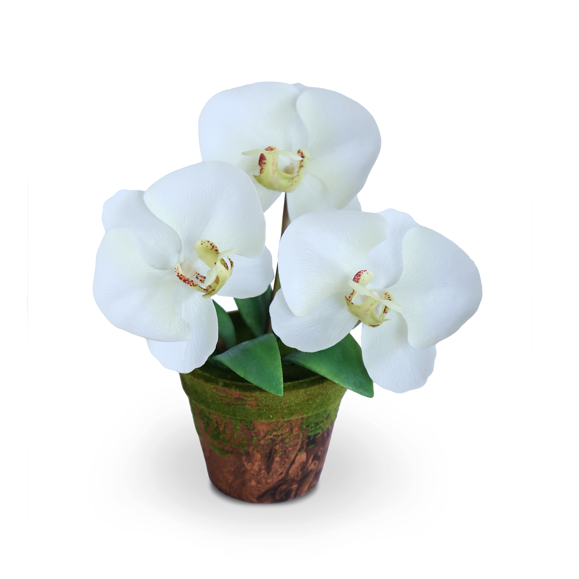 แจกันดอกไม้ประดิษฐ์ ฟาแลนนอฟซิส สีขาวครีม ขนาดกระทัดลัดเหมาะสำหรับตกแต่งโต๊ะ หรือมุมส่วนตัวต่างๆให้ดูเป็นธรรมชาติสวยงาม