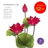 จำหน่ายดอกบัวประดิษฐ์เป็นชุดสำหรับจัดแจกัน เป็นดอกบัวหลวงปลอมขนาดใหญ่ (เท่าดอกบัวจริง) จำนวน 12 ชุด