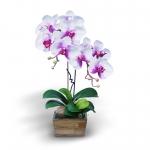 แจกันดอกไม้ประดิษฐ์ ฟาแลนนอฟซิสสีขาวโคนม่วง 2 ช่อ ในแจกันไม้จริงสีโอ๊ค