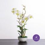 แจกันดอกไม้ประดิษฐ์ เดนโดรเบียม Dendrobium สีครีมกรีน ในแจกันเซรามิค