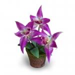 แจกันดอกไม้ประดิษฐ์ โอดอนโทกลอสซัม สีออร์คิท ขนาดกระทัดลัดเหมาะสำหรับตกแต่งโต๊ะ หรือมุมส่วนตัวต่างๆให้ดูเป็นธรรมชาติสวยงาม