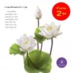 จำหน่ายดอกบัวประดิษฐ์เป็นชุดสำหรับจัดแจกัน เป็นดอกบัวหลวงปลอมขนาดใหญ่ (เท่าดอกบัวจริง) จำนวน 2 ชุด