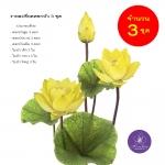 จำหน่ายดอกบัวปลอมเป็นชุดสำหรับจัดแจกัน เป็นดอกบัวหลวงปลอม ขนาดใหญ่ (เท่าดอกบัวจริง) จำนวน 3 ชุด