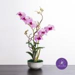 แจกันดอกไม้ประดิษฐ์ เดนโดรเบียม Dendrobium สีชมพู ในแจกันเซรามิค
