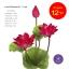 จำหน่ายดอกบัวประดิษฐ์เป็นชุดสำหรับจัดแจกัน เป็นดอกบัวหลวงปลอมขนาดใหญ่ (เท่าดอกบัวจริง) จำนวน 12 ชุด thumbnail 1